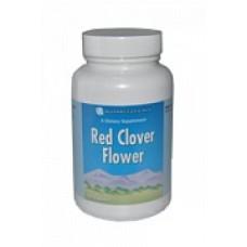 Цветки красного клевера (Red clover flower)